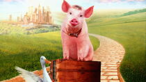 Babe: Pig in the City Watch Free