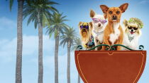 Beverly Hills Chihuahua Watch Free